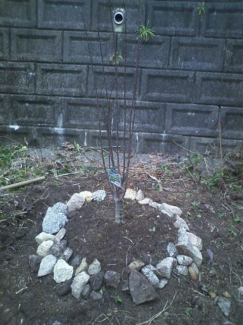たら ダメ に の 敷地 木 は の 自宅 植え 山椒